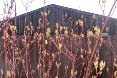 Gulval Farm Cottages - The Flower Box