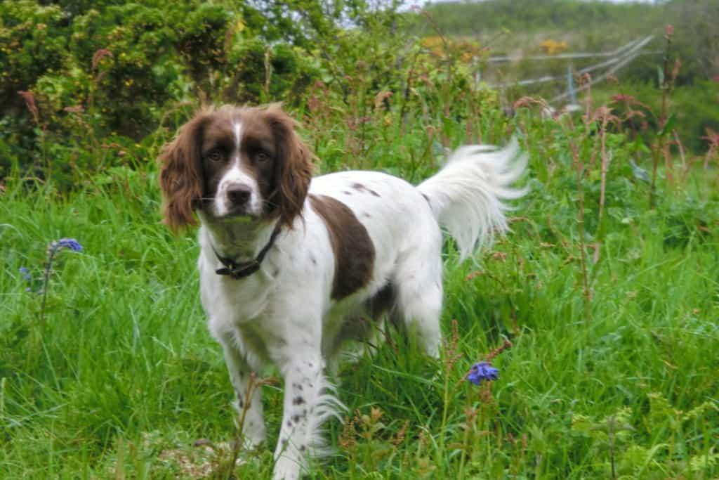 Gulval Farm Cottages - Dog Friendly